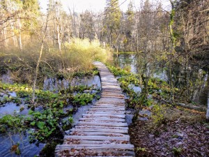 rustic-boardwalk-through-marsh